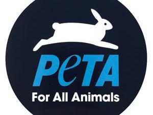 ECCO 10 VIDEO SCIOCCANTI DELLA PETA